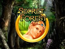 Secret Forest в Клубе на деньги
